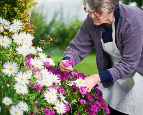 Care for Your Garden in Winter
